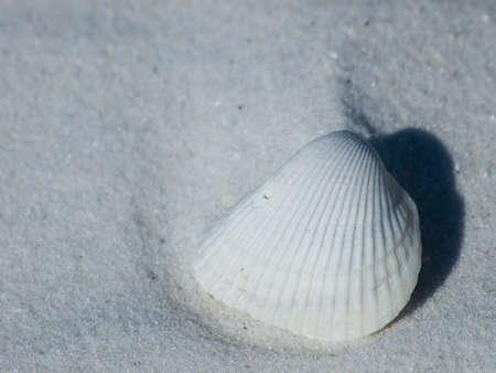 Ocean shell on Mexico Beach, Florida.