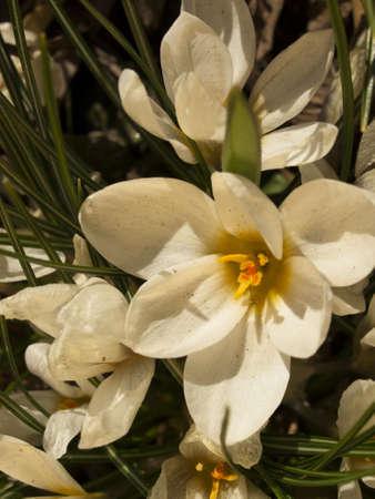 Bridght の花満開の春の庭。