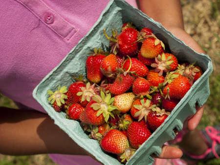 Picking rassberies on berry farm in Colorado. photo