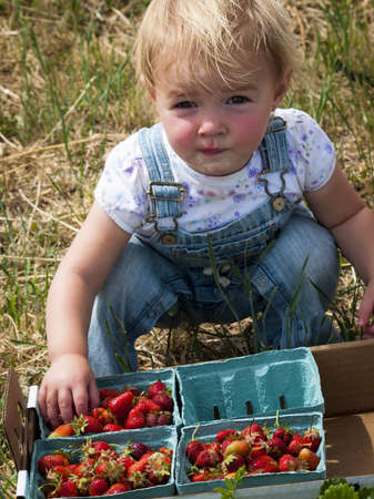 Picking rassberies on berry farm in Colorado. Stock Photo - 14140063