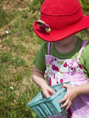 Picking rassberies on berry farm in Colorado. Stock Photo - 14140068