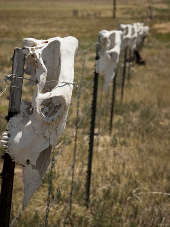 Fence with cow skulls around western ranch.