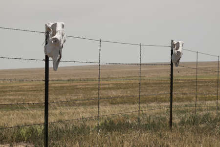 Fence with cow skulls around western ranch. photo