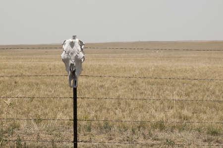 collins: 2012 Catholic School Girl Run in Fort Collins, Colorado. Editorial