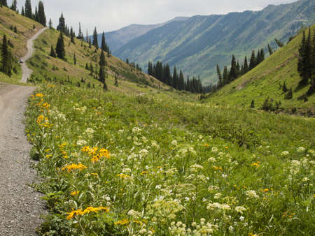 butte: Mountain path in Crested Butte, Colorado