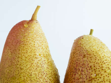 Ripe pear on white background. The cultivation of the pear in cool temperate climates extends to the remotest antiquity, and there is evidence of its use as a food since prehistoric times.