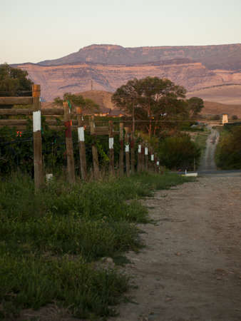 Grapes ready to be harvested at a vineyard in Palisade, Colorado. Stock Photo - 15134939