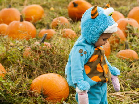 mile: Little kid in Halloween costume picking pumpkind at the pumpkin patch in aearly Autumn. 2012 Pumpkin Harvest Festival at Four Mile Historic Park, Denver. Editorial