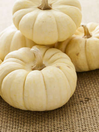 sackcloth: Small white pumpkins on burlap fabric. Stock Photo