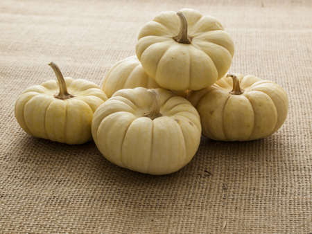 vegetabilis: Small white pumpkins on burlap fabric. Stock Photo