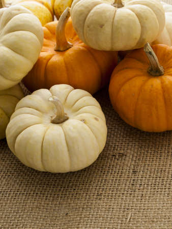 sackcloth: Small orange and white pumpkins on burlap fabric. Stock Photo