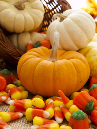 sackcloth: Small multi-color pumpkins and Halloween candies spilled from cornucopia.