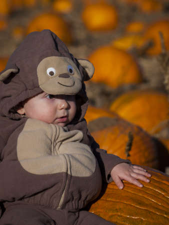 Toddler boy in Halloween costume sitting between big pumpkins. photo