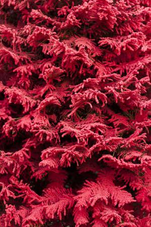 fake christmas tree: Flocked Christmas Tree with multi colors. Stock Photo