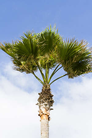 distanation: One palm with blue sky background.