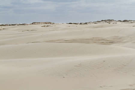 south padre: Coastal dunes of South Padre Island, TX.