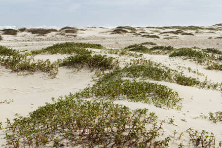 fine particles: Coastal dunes of South Padre Island, TX.