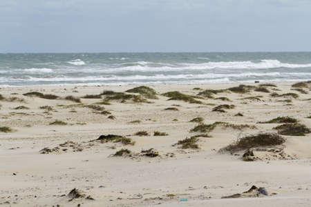 Coastal dunes of South Padre Island, TX. Stock Photo - 17179441