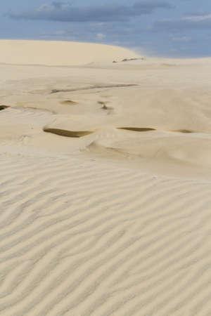south padre: Coastal dunes of South Padre Island, TX.