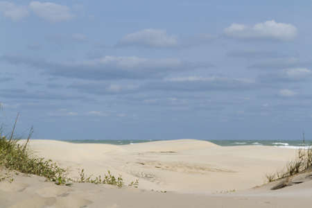 cameron county: Coastal dunes of South Padre Island, TX.
