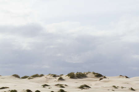 distanation: Coastal dunes of South Padre Island, TX.