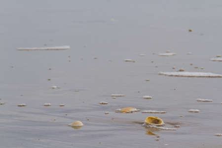 distanation: Small shells on the beach.