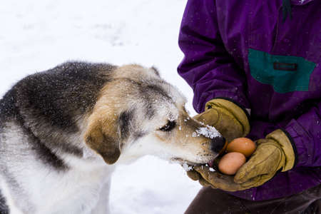 A young dog snacking on fresh farm eggs.