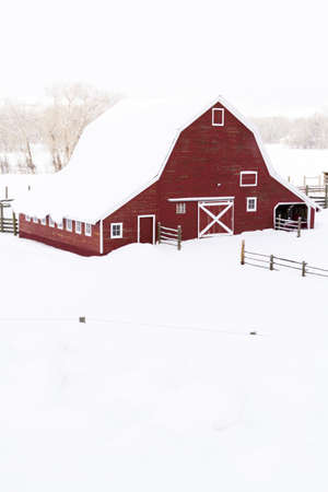 wood agricultural: Red barn in snow on lamb farm
