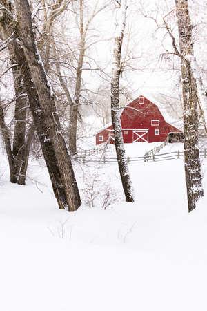 cottonwood  tree: Red barn in snow on lamb farm. Editorial
