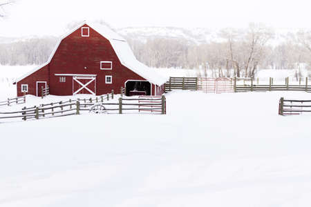 Red barn in snow on lamb farm. Stock Photo - 17950855