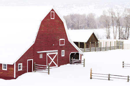Red barn in snow on lamb farm. Stock Photo - 17950863