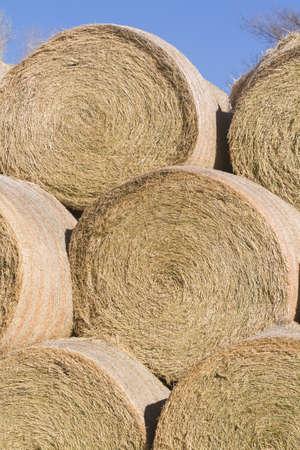 Hay rollos de pila para el almacenamiento en la granja Foto de archivo - 17874034