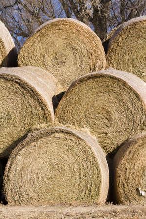 Hay rollos de pila para el almacenamiento en la granja Foto de archivo - 17874036