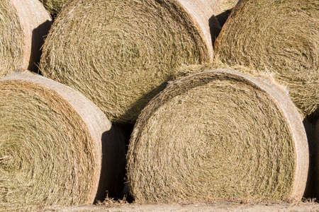 Hay rollos de pila para el almacenamiento en la granja Foto de archivo - 17874037