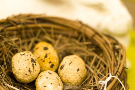 pasch: Uova di Pasqua nel nido di uccello.