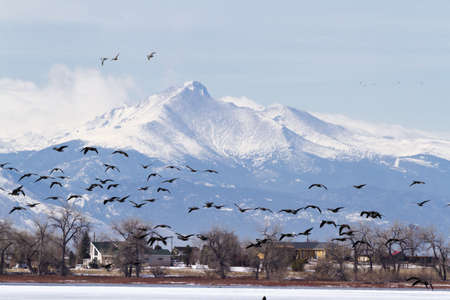 Canada geese migration at Barr Lake State Park, Colorado. Banque d'images