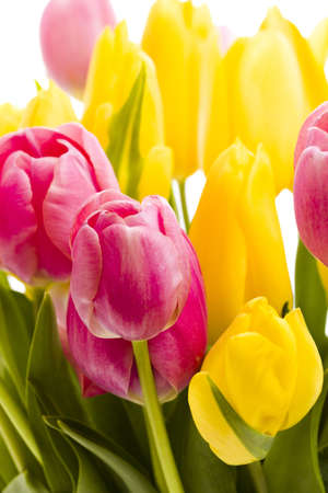 tulipa: Yellow and pink tulips in spring bouquet.