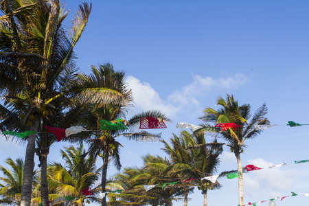 distanation: Coconut trees decorated for distanation wedding.