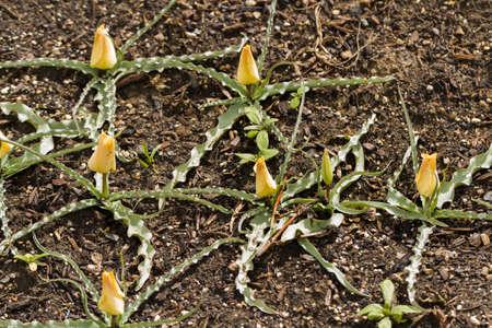 Spring garden in full bloom. Banco de Imagens