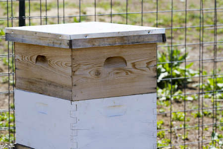 Installation de ruches au nouvel emplacement. Banque d'images - 19636632