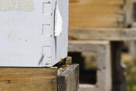Installation de ruches au nouvel emplacement. Banque d'images - 19636629