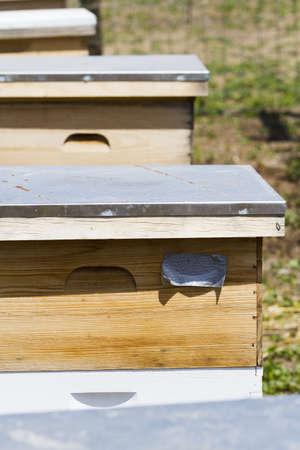 Installation de ruches au nouvel emplacement. Banque d'images - 19636638