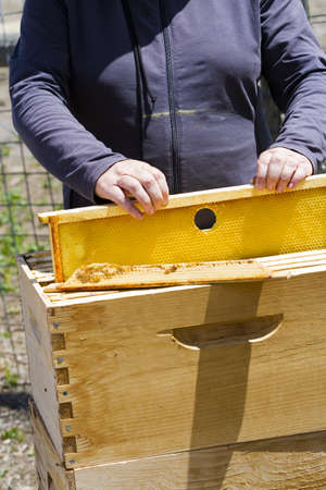Installation of bee hives at new location. photo
