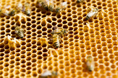 Bees working on honeycomb.
