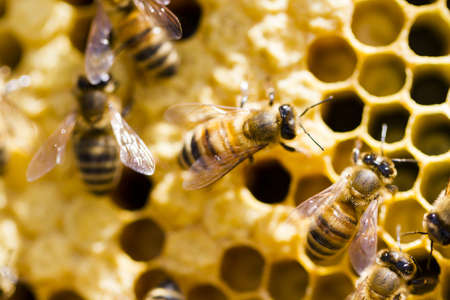 legless: Bees working on honeycomb.