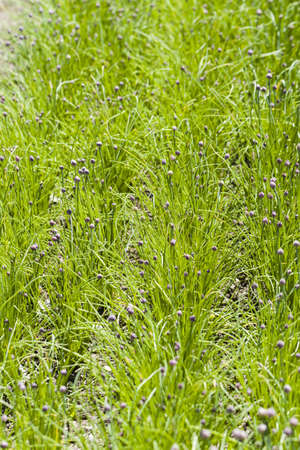 locally: Growing locally edible plants. Stock Photo