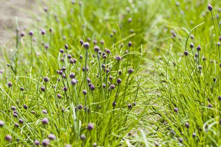 Growing locally edible plants. Banco de Imagens