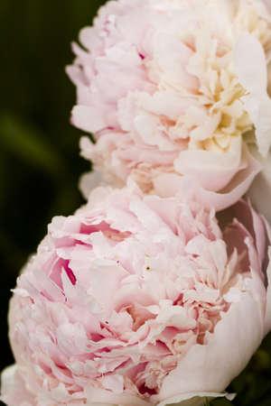 Garden in full bloom on sunny summer day. Banco de Imagens - 20260377