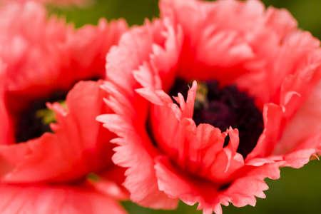 Garden in full bloom on sunny summer day. Stock Photo