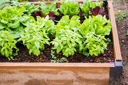 planter: Community gardening in urban community. Stock Photo